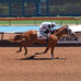 Ruidoso Downs Race Track Set to Run First Leg of the Quarter Horse Triple Crown on Sunday