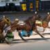 Cobble Beach Uses New Tactic for Buffalo Raceway Win